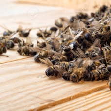 Smeared without honey: mass bee death from the Chinese chemistry continues in Russia